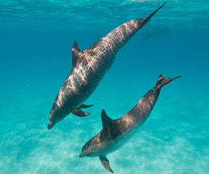 animal, summer, and dolphin image