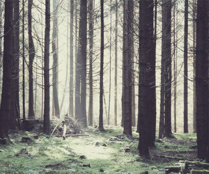 trees and forest image