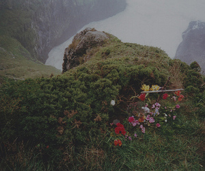 flowers and rocks image