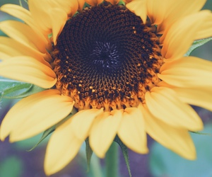 flowers, sunflower, and pretty image