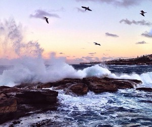 bird, ocean, and sea image