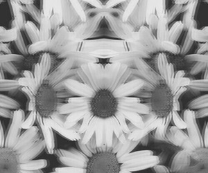 flowers, black, and hipster image