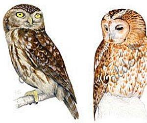 animals, birds, and draw image