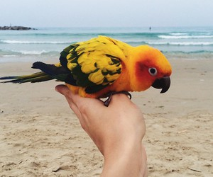 parrot and hand image