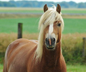 horse picture, horse pictures, and pictures of horses image
