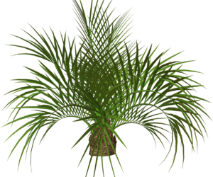 green, palm tree, and plant image