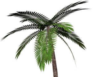 overlay and palm tree image