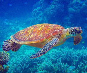 sea and turtle image