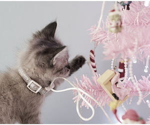 cat, tree, and cute image