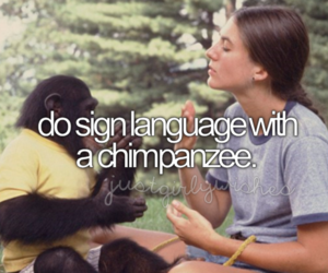 chimpanzee, language, and tropical image