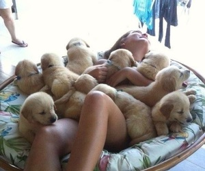 puppies, puppy, and goldens image