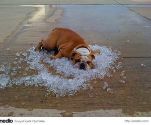 dog, ice, and Hot image
