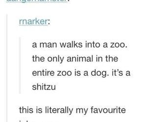 funny, joke, and zoo image