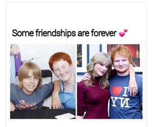 funny, Taylor Swift, and ed sheeran image