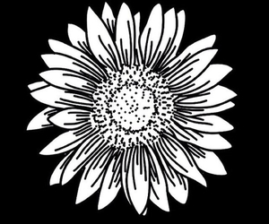 overlay, flowers, and black and white image