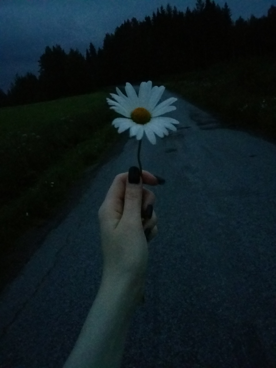 Grunge Indie Hipster Daisy Flower On We Heart It