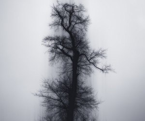 tree and black image