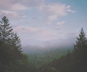 forest, nature, and clouds image