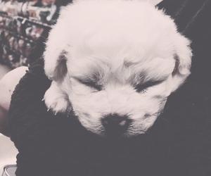 baby, dog, and sleep image