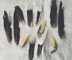 feather, nature, and feathers image