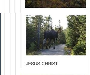 supernatural and moose image