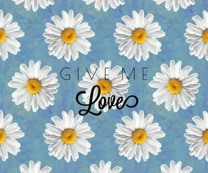 flores, fondo, and love image
