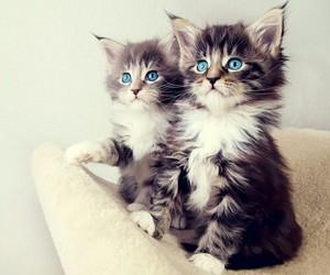 تفسير رؤية القطط في الحلم و القطه في المنام