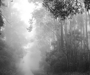 black and white, mist, and mount macedon image