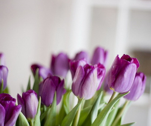 flowers, purple, and tulips image