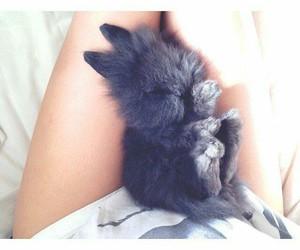 cute, rabbit, and animals image