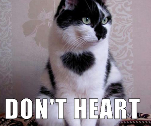 cat, feelings, and funny cat image