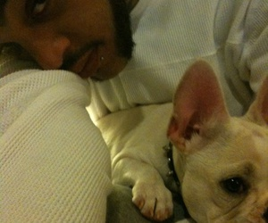 boston terrier, Gym Class Heroes, and travie mccoy image