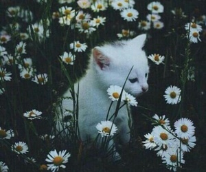 cat, white, and flowers image