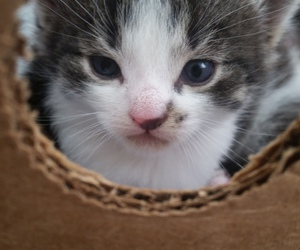kitty, summer, and 3weeks image