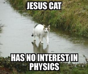 cat, in, and interest image