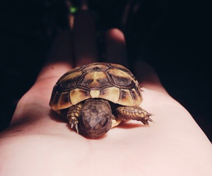 baby, turtle, and cute image