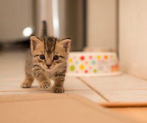 cat, kitten, and lovely image