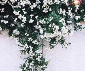 flowers, grunge, and white image