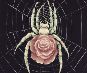 kathleen lolley, roses, and spiders image