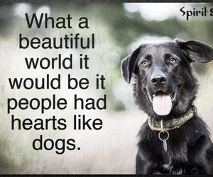 beautiful world, black, and dogs image