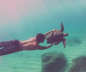 summer, boy, and turtle image