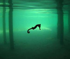 seahorse, sea, and ocean image