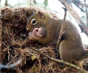 animal, sweet, and love image