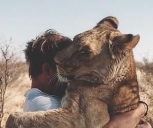 animal, lion, and hug image
