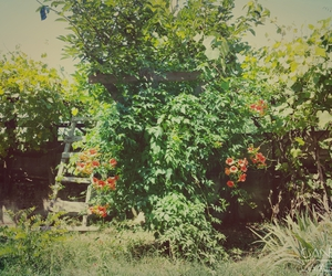 garden, summer, and nature image