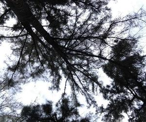 black, forest, and sky image
