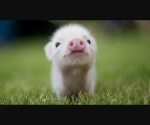 cute, pig, and pink image