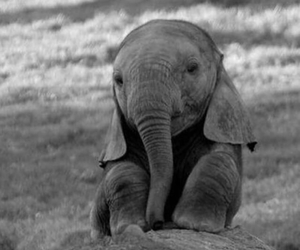 baby elephant and too cute image