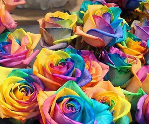 flores, multicolor, and perfectas image