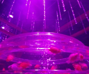 goldfish, pink, and red image